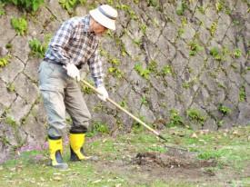 雑草を丁寧に取り除きます
