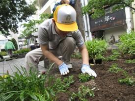 穴を掘って、、土をかぶっせて、、、